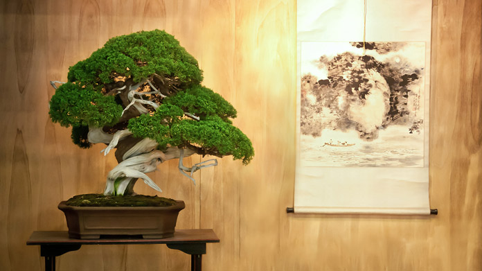 Bonsai tree in front of a paneled wall with a artistic print displayed on a scroll