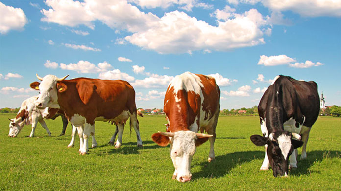 https://cdn2.howtostartanllc.comFour cows grazing in field with blue sky