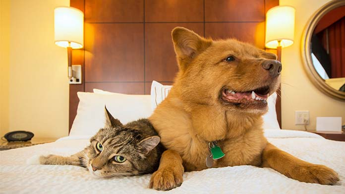 A cat and dog snuggling on a hotel bed